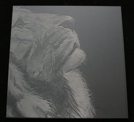 Etching of a Lion in 3mm Mineral Grey Acrylic from the Naturals Range by Perspex\\n\\n12/04/2016 12:46